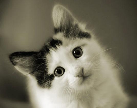 静态的喵星人,憨态可掬,看到卖萌的猫咪总是会让人很开心呢,虽然不会