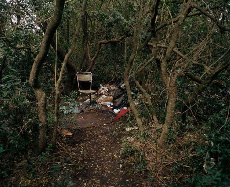 壁纸 风景 森林 桌面 800_651