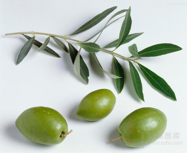 4、橄榄橄榄叶精华有助皮肤细胞对抗外界侵害   早在古希腊时代,橄榄树就是生命与健康的象征,除了可以作为健康食品食用之外,更有突出的美容功效。由树叶到果实,橄榄树全身都能提炼出护肤精华。橄榄叶精华有助皮肤细胞对抗污染、紫外线与压力引致的氧化;而橄榄果实中则含有另一强效抗氧化成分酚化合物,它与油橄榄苦素结合后,能提供双重抗氧化修护。