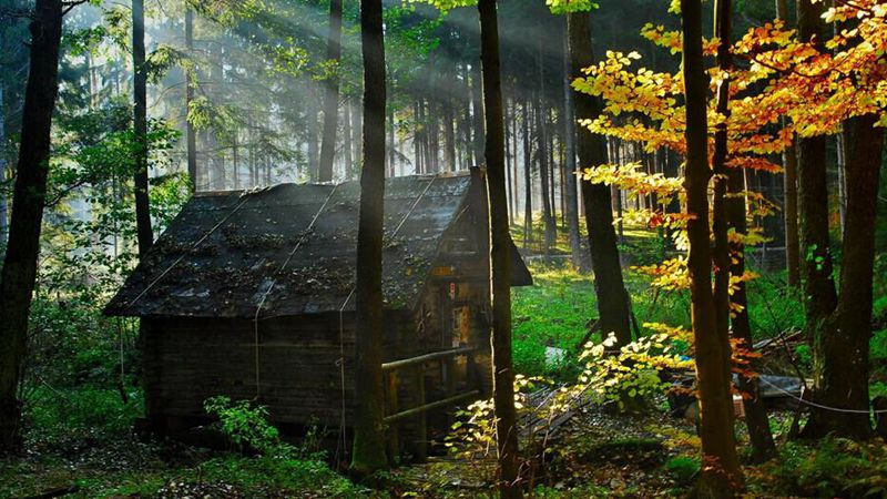 每當我們想到森林中的房子