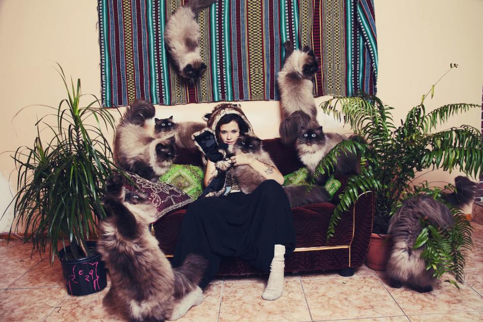 创意合影:15张图告诉你猫奴的日常