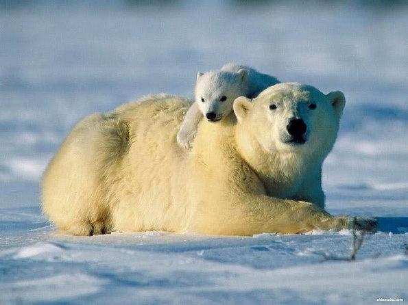 各种动物可爱宝宝图片