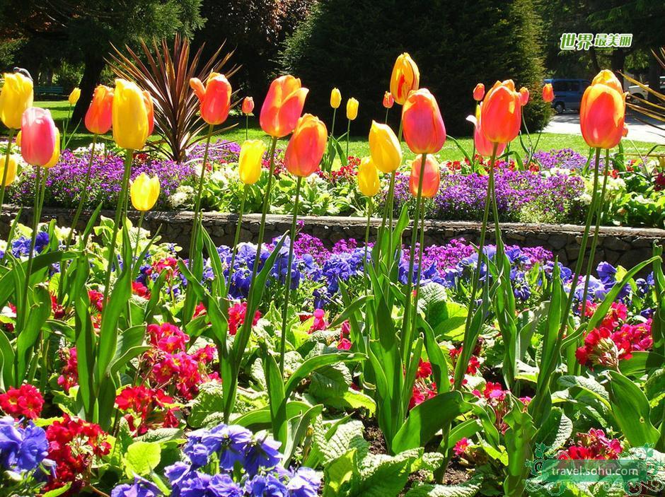 开始拾掇花园,春天的气息