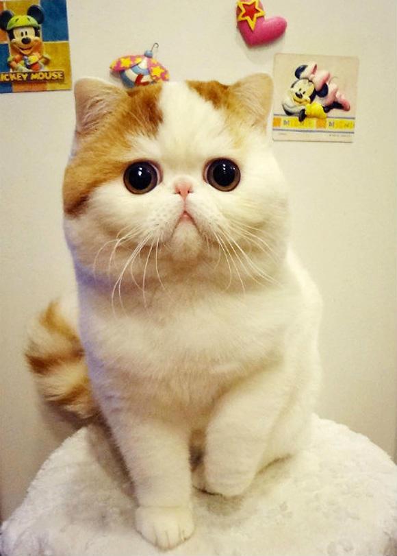 包子脸的史努比猫 丰腴身材呆萌大眼睛5643631 女人频道