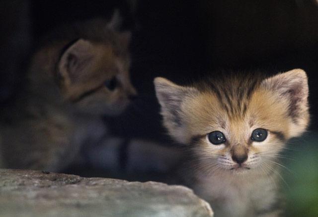 轻松一刻:2012年最可爱的动物宝宝照片