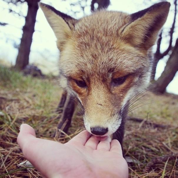 20岁的芬兰摄影师用松鼠语和他所见过的那些野生动物达成一个简单的贸易:只要给一些零食,这些动物就会按照他所想的去摆姿势,所以他可以拍摄到一些超级可爱的画面。看着这些小动物吃东西时的样子,简直萌爆了有木有!真是杠杠的吃货呀!