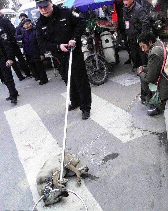 无法言说的悲哀:流浪汉看同伴流浪狗被警察处死(组图) - 乌裕尔河 - 乌裕尔河2