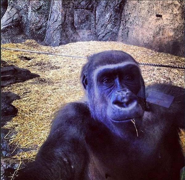 超搞笑动物自拍7513563-教育图片库-大视野-搜狐