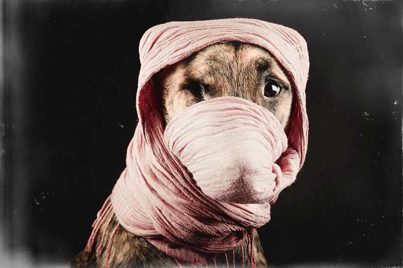 幽默可爱的狗狗肖像摄影6459463-男人图片库-大视野