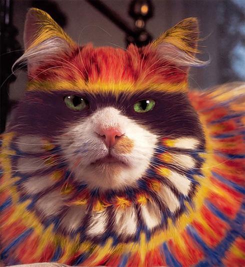 科技视觉:猫咪彩绘 古老艺术的繁衍-猫咪繁殖期
