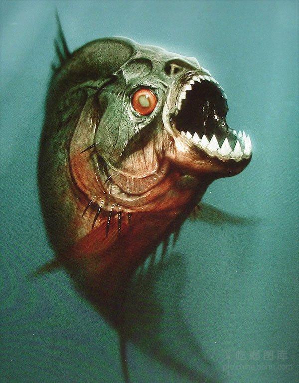 盘点凶猛可怕的恶魔鱼 水虎鱼是一种凶猛的掠食性鱼类,恐怖片《食人鱼3D》正是以它为原型。它们的牙齿尖利且排列紧密,能快速将猎物撕成碎片。它们食性贪婪,侵略性极强,在缺乏食物的时候甚至捕食同类。水虎鱼有时也会以植物种子为食。它们之所以常结成群体,除了作为捕食策略之外,还是抵御掠食者如凯门鳄和淡水豚袭击的手段。水虎鱼虽然凶猛,却常常变成人类的盘中餐。不过在亚马逊水域,水虎鱼群有时也会攻击比它们大得多的动物。在鲜血的刺激下,它们的撕咬异常猛烈。