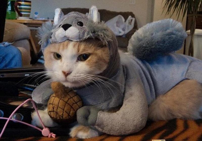 风景图片大全加动物猫