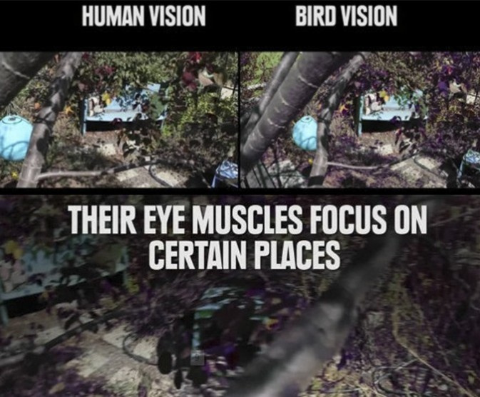 动物眼中的世界 比较人眼与动物眼中的画面