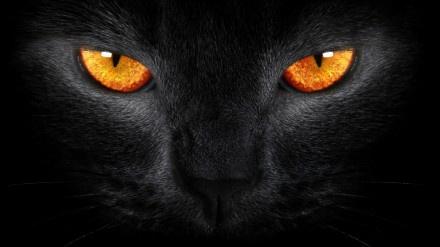 深邃的黑猫之眼 喵星人的坚韧性格