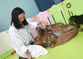 """搜狐娱乐讯  8月22日,江一燕在微博晒出一组照片,配文""""陪孩子们到野生动物园。被啃了一身淤青。不愧..."""