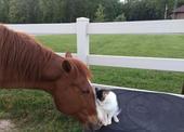 2019-06-20报道,都说猫和狗才是相爱相杀的一对,辣么猫和马在一起是什么画风?据英国媒体消息,...