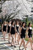 4月10日,韩国大田市大德大学校园里,模特专业学生迎着和煦的春光在樱花大道上进行室外练习。该校教授任...