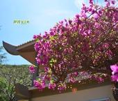 越南拾遗:那些花枝招展的日子
