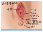 """阴道分娩时""""会阴撕裂伤""""分级示意图"""