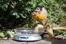 伦敦动物园启动年度体检 萌态百出
