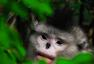 北京国际摄影周参展作品 龙勇城-滇金丝猴