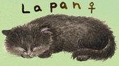《子猫絮语》超可爱猫咪手绘msn与qq表情